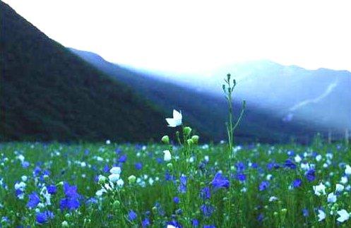 왜 들꽃이 장미보다 아름답게 느껴지는가?
